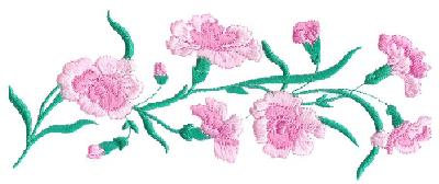 Carnations Border